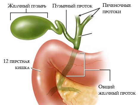массаж внутренних органов Чебоксары